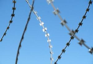 Фото колючей проволоки с металлическими ромбовидными зубцами, shymkent.avizinfo.kz